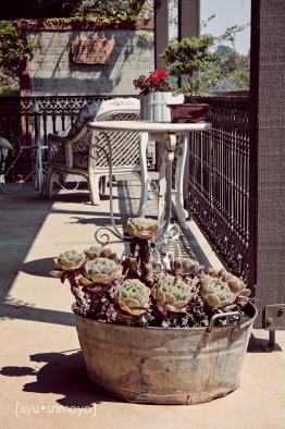 The Scented Rose Garden & Tea House