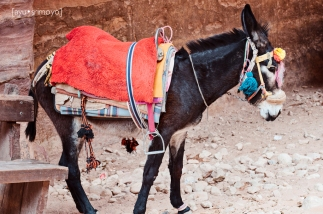Animal for hire, Petra, Jordan