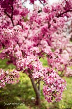 all that pink - Tulip Top Garden